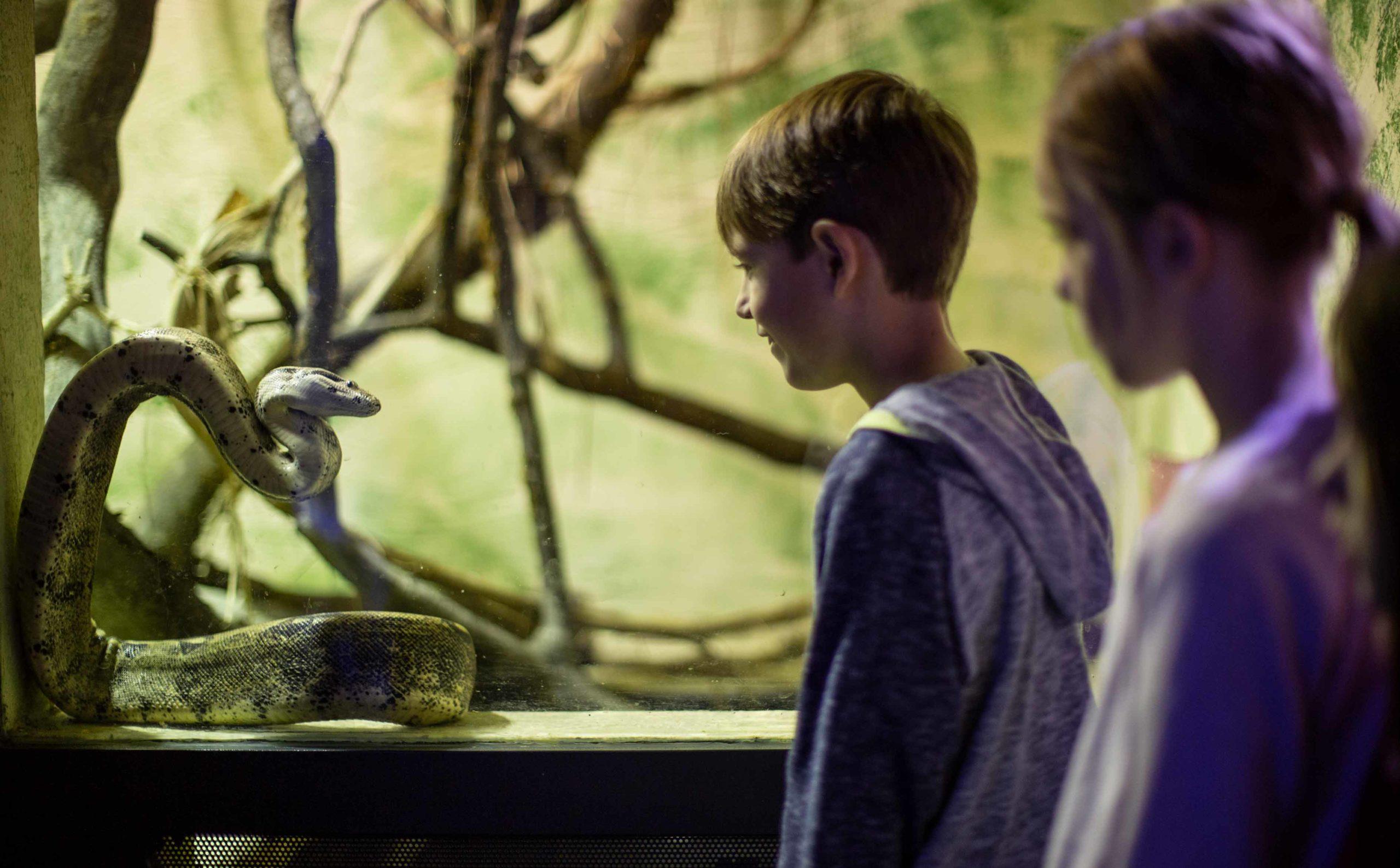 Aqua & Terra Zoo, Kinder beobachten Schlange