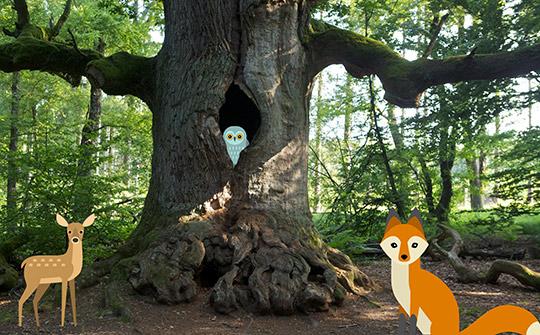 Workshop Bäume Ökopark Hartberg
