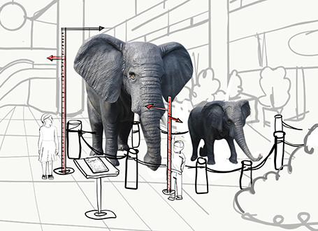 Elefanten Africa´s Big 5
