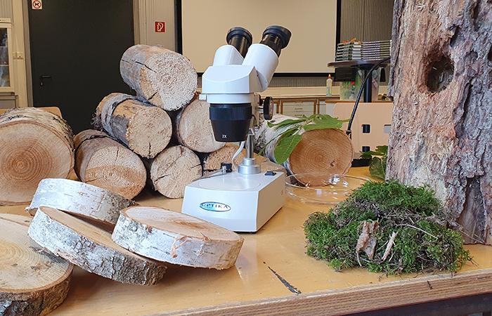 Workshop wenn Bäume sprechen könnten